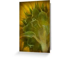 Sunflower Texture Greeting Card