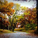 A Warm Country Drive In Autumn by Linda Miller Gesualdo