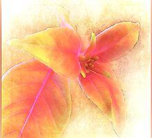 ~ Fuschia Leaves ~ by Brenda Boisvert