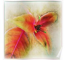 ~ Fuschia Leaves 2 ~ Poster