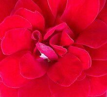 Really Ruby Red by KazM
