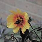 Busy bee in the last days of summer by Andicurrie