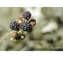 Blackberries delight Photographic Print