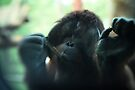 The Softer Side of Orangutangs by KatsEyePhoto