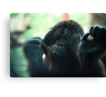 The Softer Side of Orangutangs Canvas Print