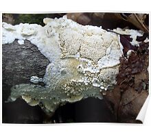 Milk White Toothed Polypore Poster