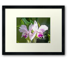 Pretty Pink & Iris Framed Print