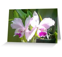 Pretty Pink & Iris Greeting Card
