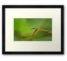 mature matis Framed Print