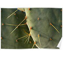 Desert Greenery Poster