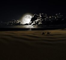 By Moonlight by Nathalie Chaput