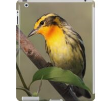Blackburnian Warbler  iPad Case/Skin