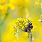 Bee Happy in Yellow by Vicki Field