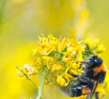 Bee Happy in Yellow Sticker