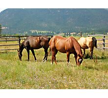 A summer at the Ranch Photographic Print