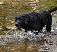 Natural in the Water by SamTheCowdog