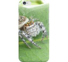 Spider looking at you iPhone Case/Skin