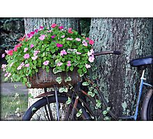 Flowers In A Basket Photographic Print