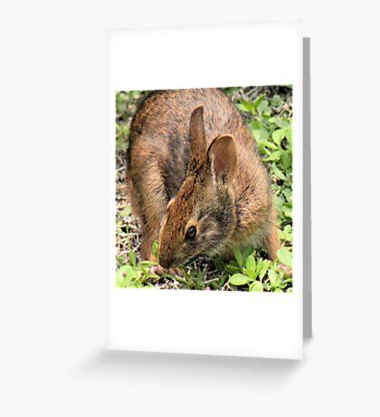 Wild Brown Rabbit Greeting Card