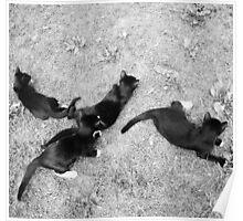 Kittens  Poster