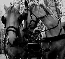 White City Horses by Kristy-Lee