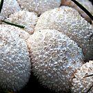 Puff Balls by Marcia Rubin