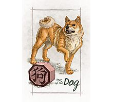 Chinese Zodiac - Year of the Dog Photographic Print