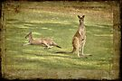 Kangaroos by Elaine Teague