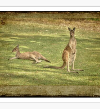 Kangaroos Sticker