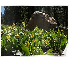Forest Flora Poster