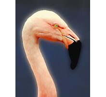 Flamingo Profile Photographic Print