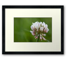 Tiny Clover Framed Print