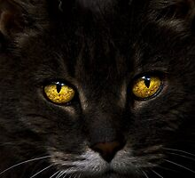 Cat's Eyes by gmpepprell