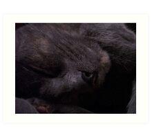 Sweet Feline Dreams... Art Print