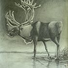 Caribou by Phyllis Dixon