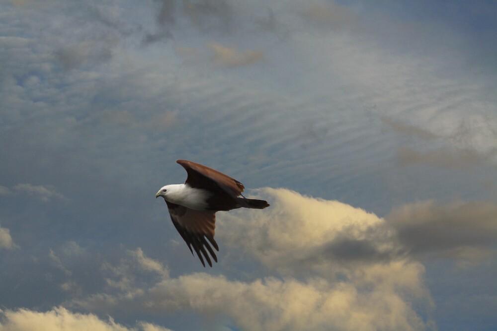 Scavenger Kite by byronbackyard