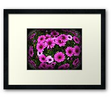 Daisies  in a cluster - Spring 2009 Framed Print
