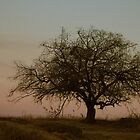 One tree by betsum