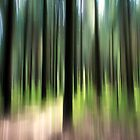 Forest by Ulf Buschmann