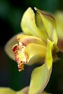 Yellow Cymbidium Orchid by Renee Hubbard Fine Art Photography
