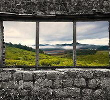 Window to another world by Vikram Franklin