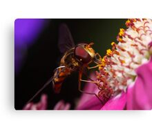 Hoverfly Diner Canvas Print