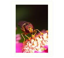 Hoverfly Face Art Print