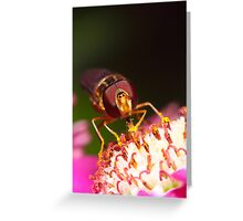 Hoverfly Face Greeting Card