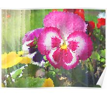 Pansy. Poster