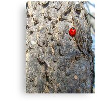 Lady(bug) in Red Canvas Print