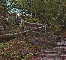 The steps - Walking into Frensham woods - 4/8 by pathseeker
