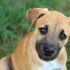 Little Black Mouth Cur by Olivia Moore