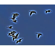 In Migration Photographic Print
