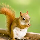 Red Squirrel (female) by Sean McConnery